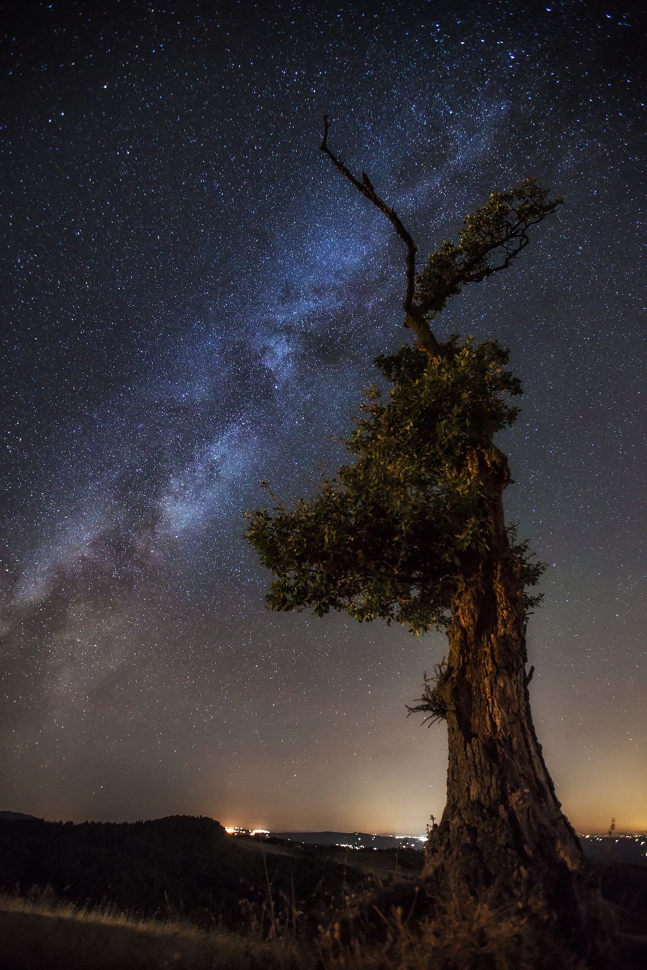 milky way tree italy